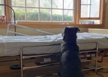Cane nero davanti ad un letto di ospedale