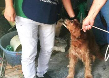 Cane salvato dalla protezione animali