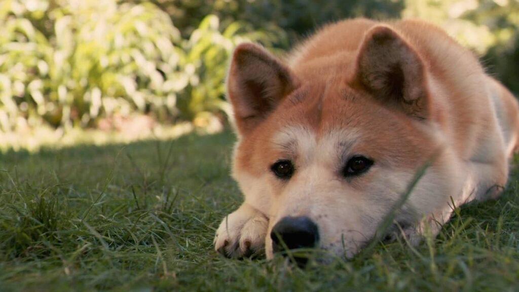 Cane sdraiato sull'erba