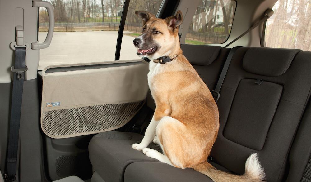 Cane seduto sul sedile di una macchina