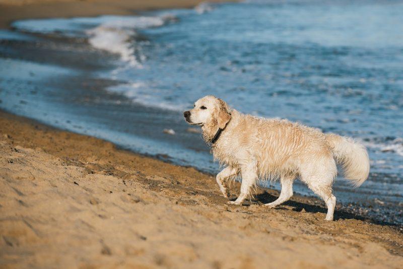 Cane sul lungo mare