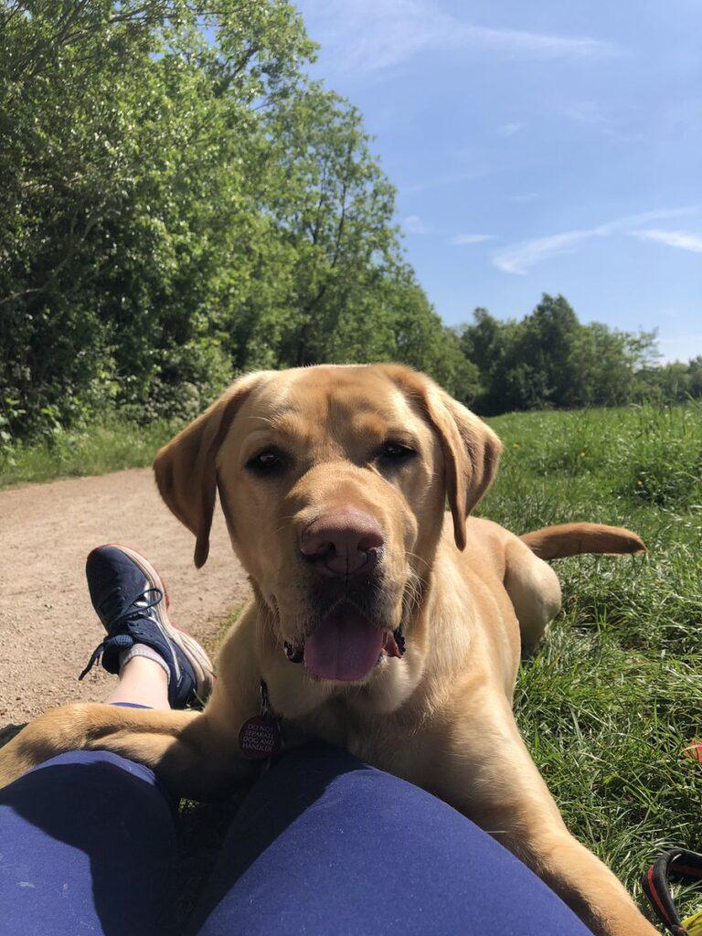 Ace, il cane che salva la proprietaria allergica persino ai suoi capelli