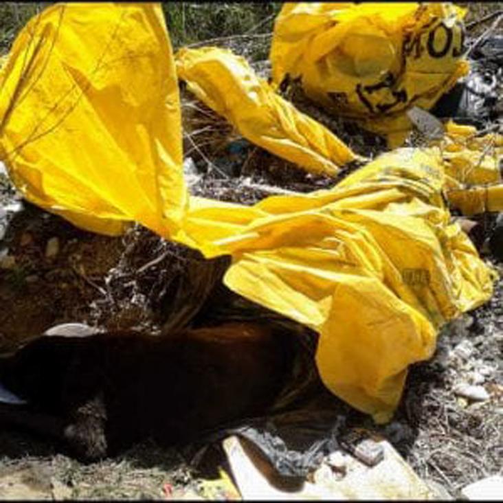 Cane tra i rifiuti