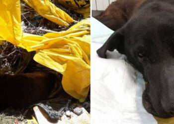 Cane trovato tra i rifiuti