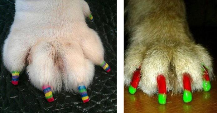Cani con le unghie colorate