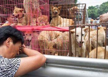 Cani dentro a delle gabbie