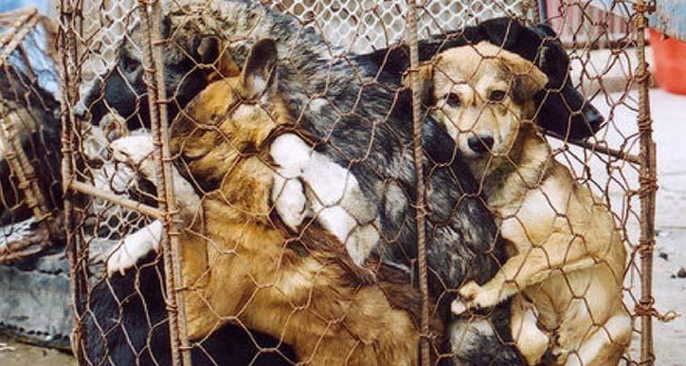 Cani dentro una gabbia