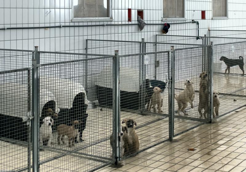 Cani in gabbia in canile