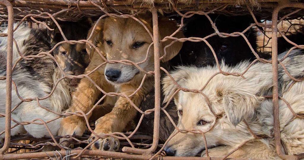 Cani stipati dentro ad una gabbia
