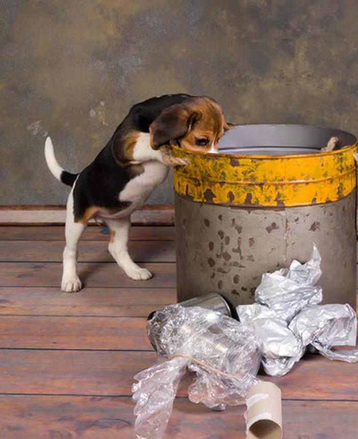 Cucciolo di cane che cerca nella spazzatura