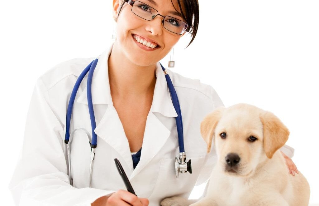 Cani: la prima mutua veterinaria è in arrivo, ecco come funziona