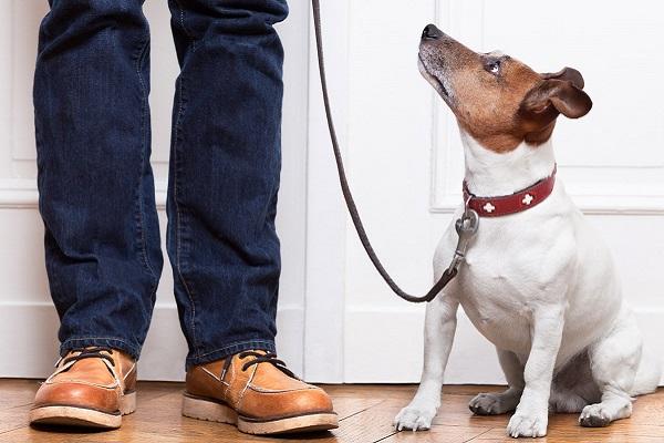 cane davanti alla porta pronto per uscire
