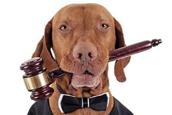 cane travestito da giudice