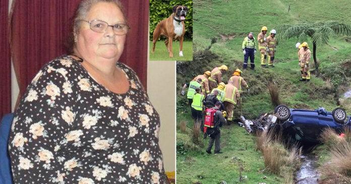 Il cane Pat che ha salvato la sua padrona dopo un incidente