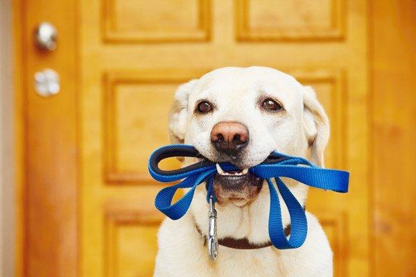 cane con guinzaglio in bocca