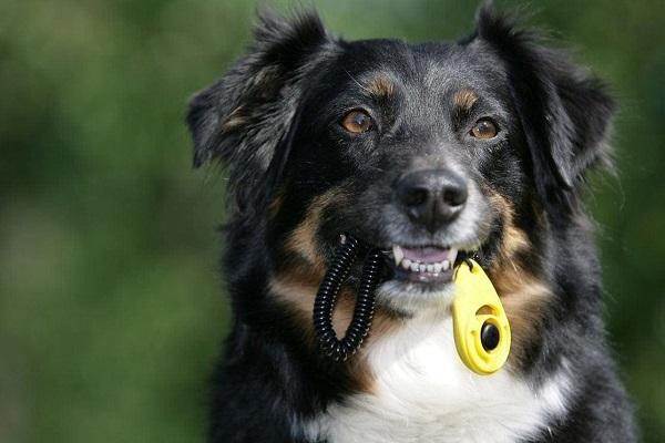 cane e clicker
