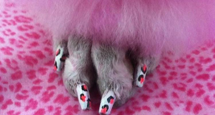 Le unghie di un cane colorate