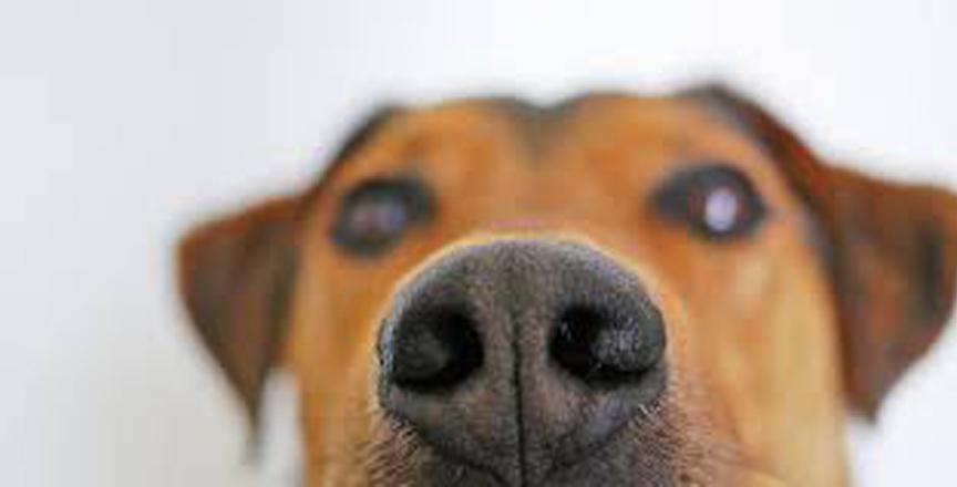 Naso di un cane