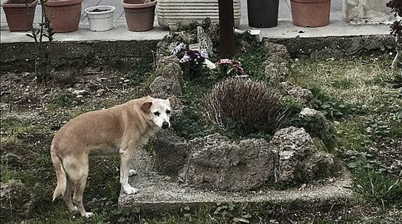 Nicoletta, il cane che aspetta il padrone defunto