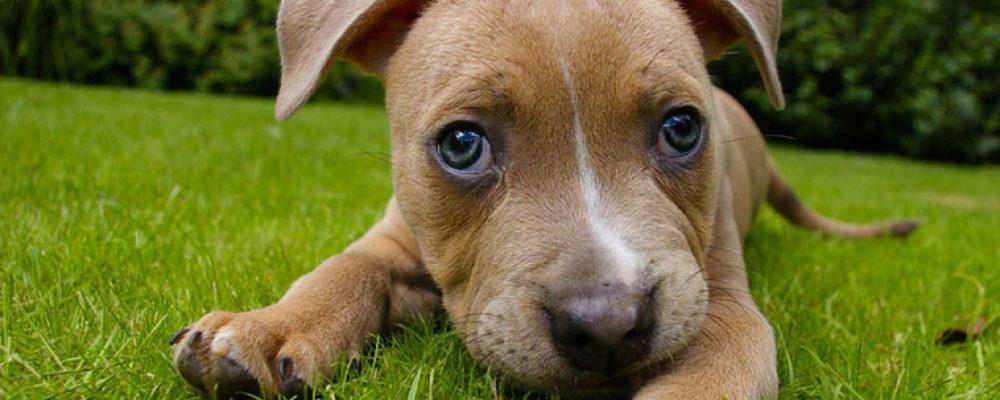 Primo piano cucciolo di cane