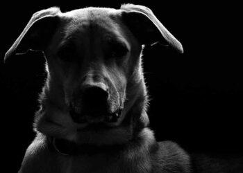 Primo piano di un cane