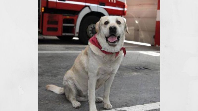 Ruben, il cane pompiere