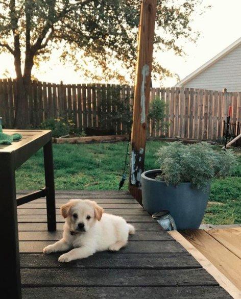 Sunny-cucciolo