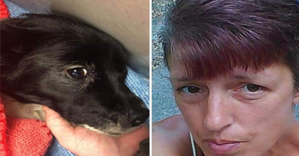 Un Chihuahua con la sua padrona