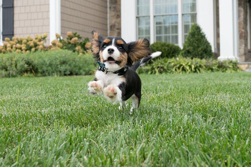 Un cane che corre in giardino