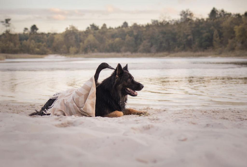Un cane con un'anatra
