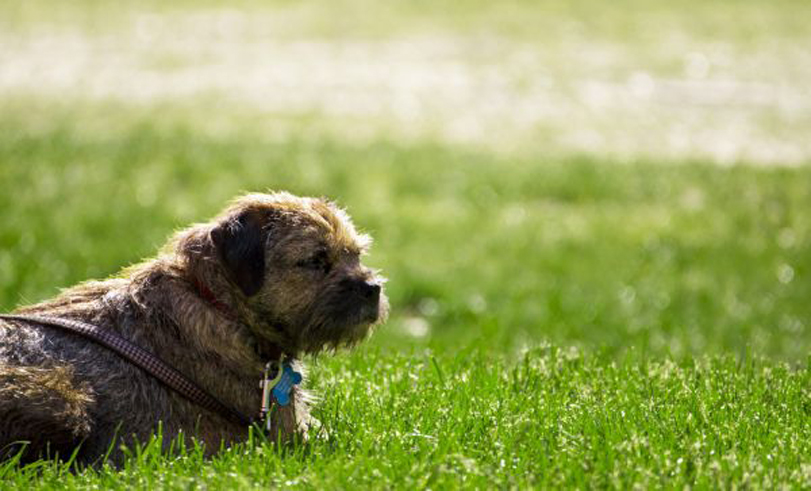 Un cane in giardino