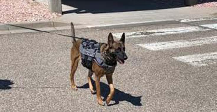 Cani poliziotto: l'importanza di non abbandonarli quando vanno in pensione