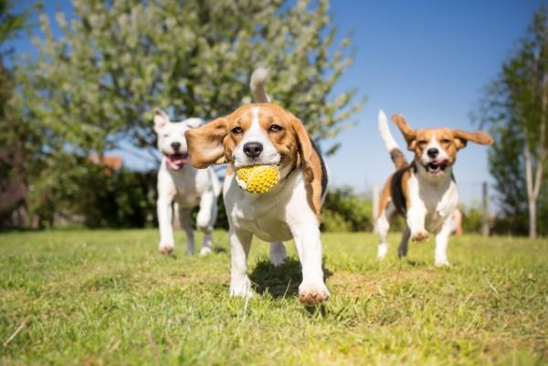 cani giocano al parco