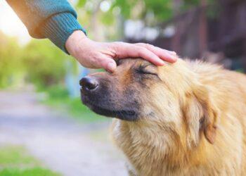 un cane ad orecchie basse