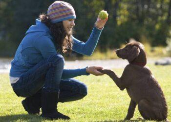 una donna gioca con un cane e una pallina