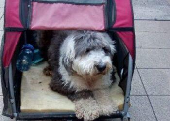 al-cane-in-fin-di-vita-viene-rovinata-lultima-passeggiata-da-una-multa