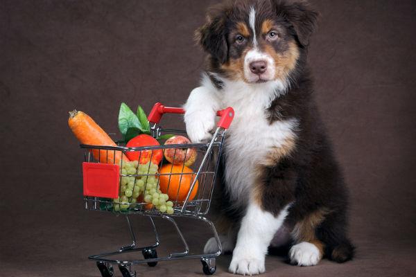 Alimenti per aiutare il cane con un tumore: ecco quali sono