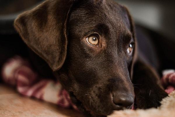 cane debilitato