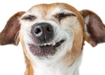 cane che sorride