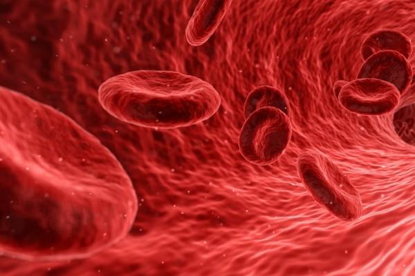 globuli rossi nel sangue