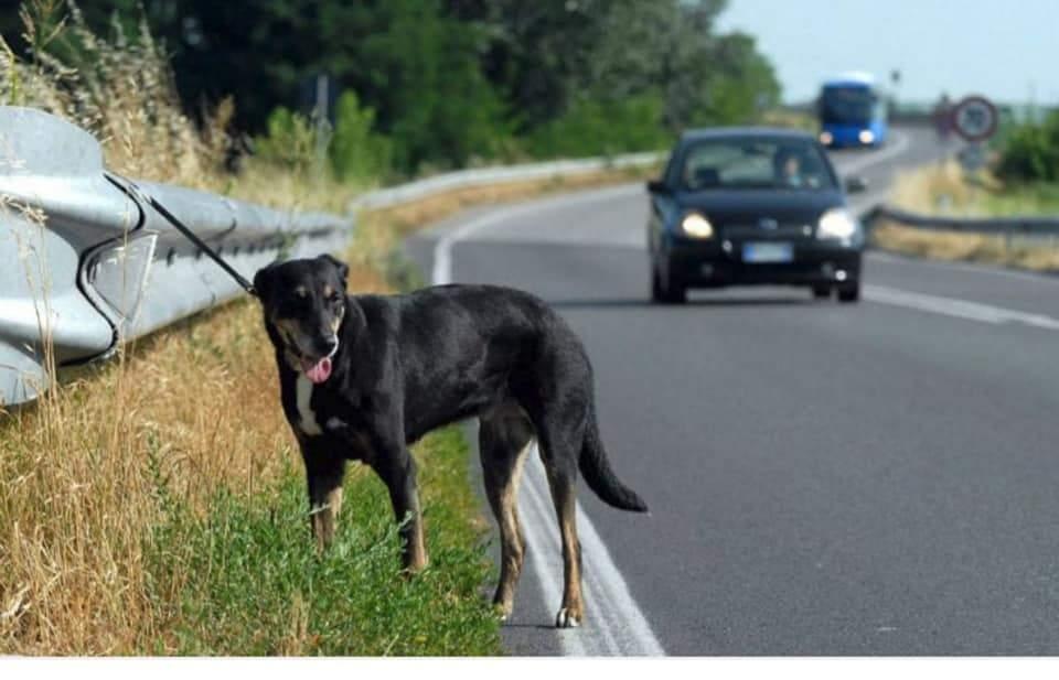 cane-abbandonato-autostrada