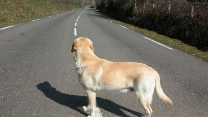cane-abbandonato-strada