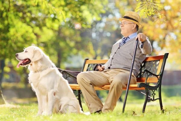 cane seduto vicino a una panchina