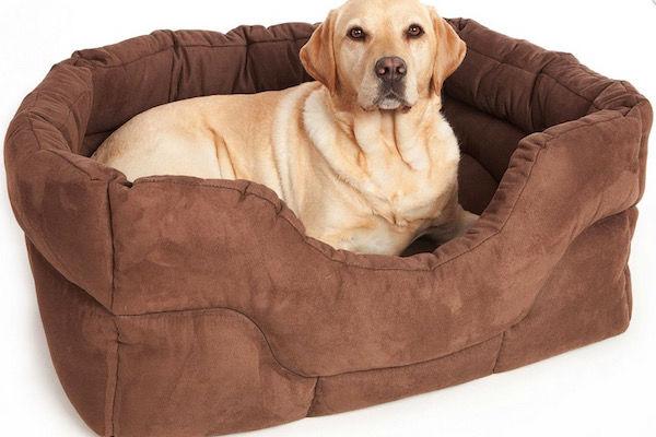 cane sulla cuccia
