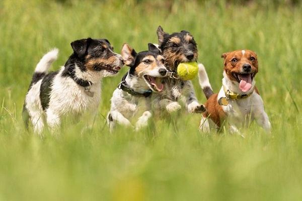 cani che si divertono