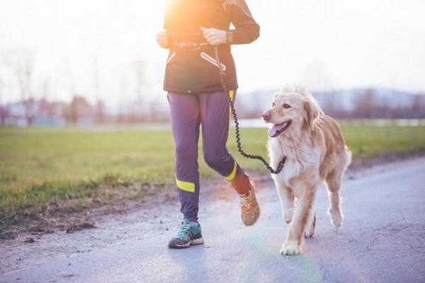 corsa con il cane