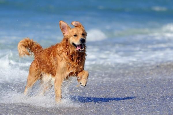 cane corre felice al mare