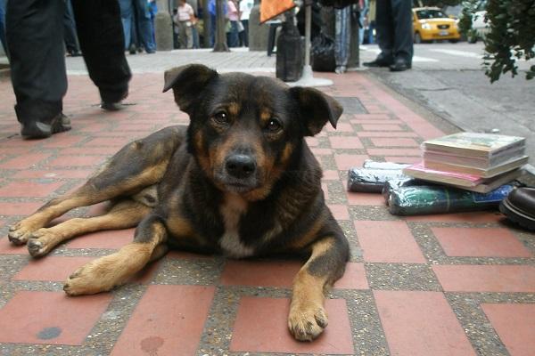 Cane di quartiere, è un randagio? In cosa consiste?