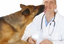 cane lecca veterinario