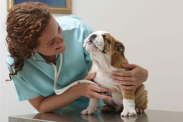 cane del veterinario